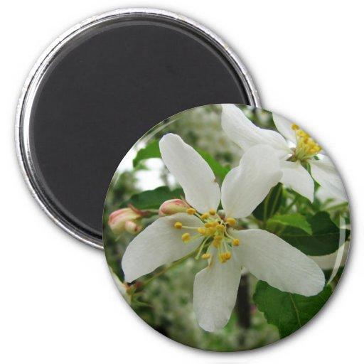 Lengua de la preferencia blanca del flor de Apple  Imán Redondo 5 Cm