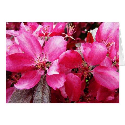 Lengua de la preferencia rosada del flor de Apple  Tarjeton