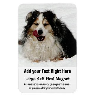 Lengua de perro australiana imán rectangular