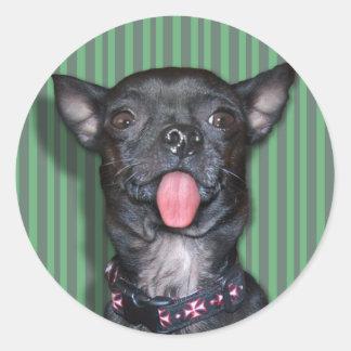 Lengua de perro de la chihuahua pegatina redonda