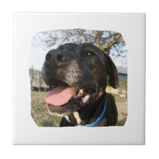 Lengua del rosa del perro negro que sonríe en cáma azulejo cuadrado pequeño
