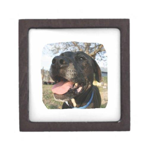 Lengua del rosa del perro negro que sonríe en cáma caja de joyas de calidad