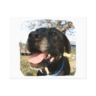 Lengua del rosa del perro negro que sonríe en cáma impresión en lienzo