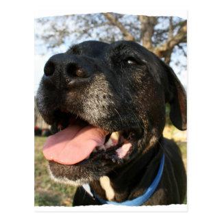 Lengua del rosa del perro negro que sonríe en postales