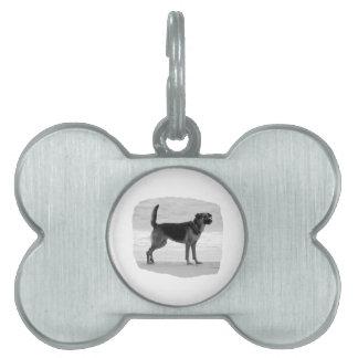 Lengua del soporte de la playa del bw del pastor a placa de nombre de mascota