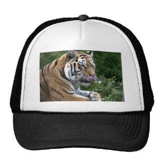 Lengua del tigre gorro de camionero