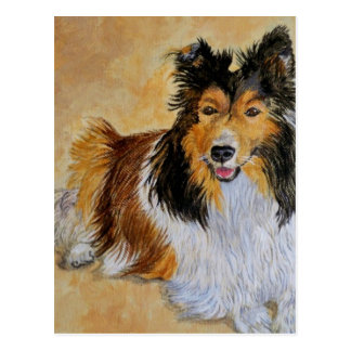 Lennie the Sheltie Postcard