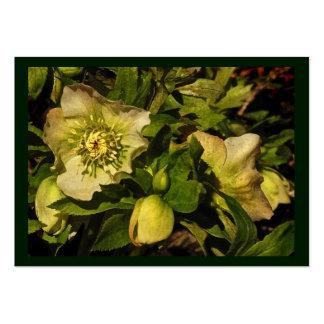 Lenten Rose Hellebore ATC Large Business Cards (Pack Of 100)