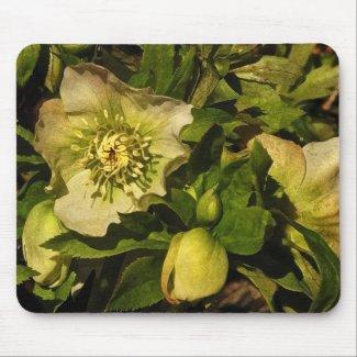 Lenten Rose Hellebore Mouse Pad