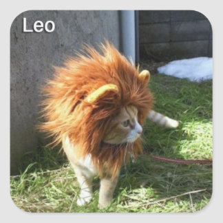 Leo Cat Sticker