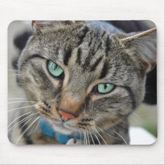 Leo el gatito tapete de ratones