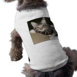 Leo Pet Shirt