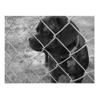 Leo: Puggle Dog Poster