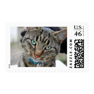 Leo the Kitten Stamps