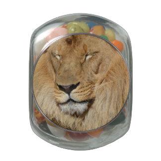 León adorable jarrones cristal