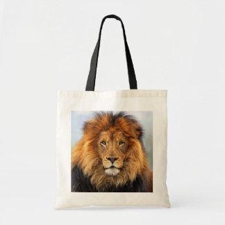 León africano 1