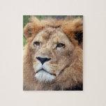 león africano 11 rompecabezas con fotos