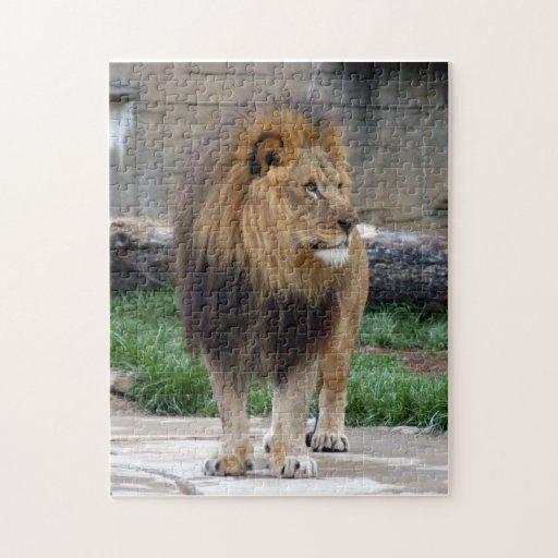 león africano 18 rompecabeza con fotos