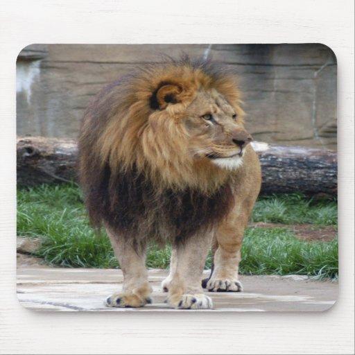 león africano 18 alfombrillas de raton