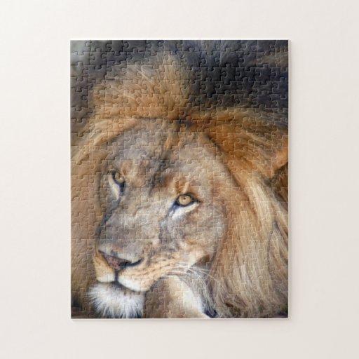 león africano 20 puzzles con fotos