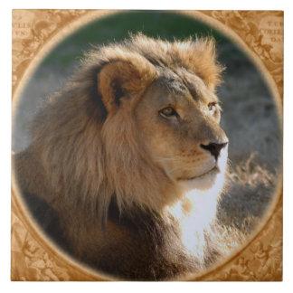 León africano 6775e11x11fram-b azulejo cuadrado grande