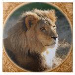 León africano 6775e11x11fram-b tejas  cerámicas