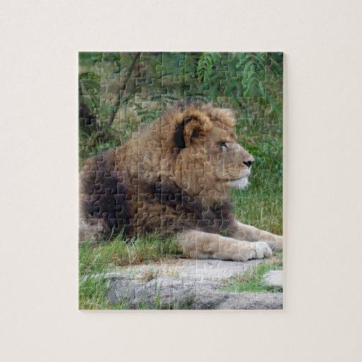 león africano 9 puzzle