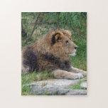 león africano 9 puzzle con fotos
