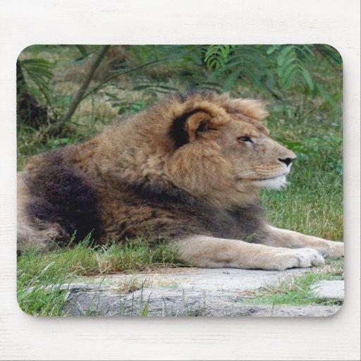 león africano 9 alfombrillas de raton