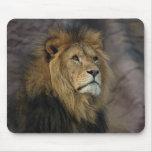 León africano alfombrillas de raton