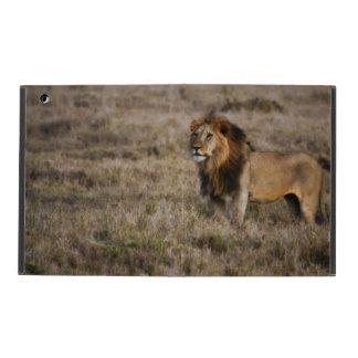 León africano en el caso del iPad de Powis de la