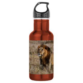 León africano en hierba