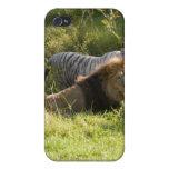 León africano i iPhone 4 cárcasas