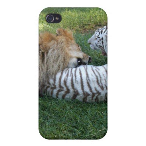 León africano i iPhone 4 cobertura