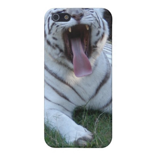 León africano i iPhone 5 cárcasas