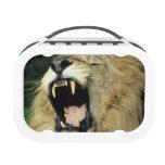 león africano masculino Negro-crinado que bosteza