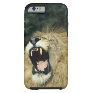 león africano masculino Negro-crinado que bosteza, Funda De iPhone 6 Tough