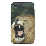 león africano masculino Negro-crinado que bosteza iPhone 3 Tough Cárcasa