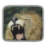 león africano masculino Negro-crinado que bosteza Funda Para iPads