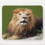 León africano Mousepad (810) Alfombrilla De Raton