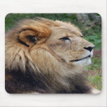 León africano Mousepad (810) Alfombrillas De Ratones