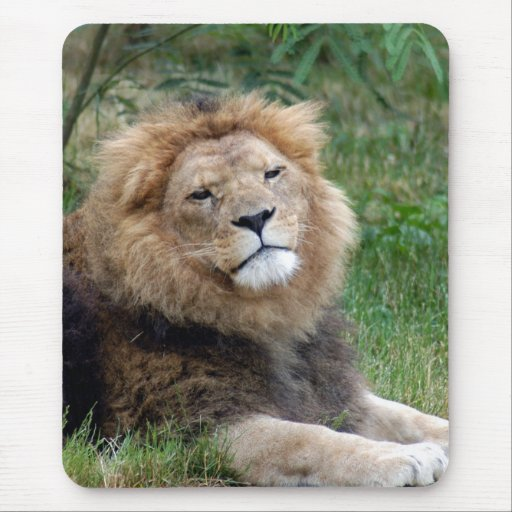 León africano Mousepad (810) Alfombrilla De Ratones