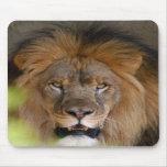 León africano Mousepad (810) Tapetes De Raton