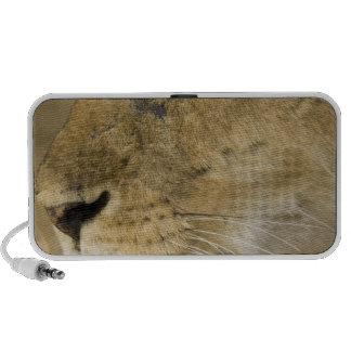 León africano, Panthera leo, cierre encima del ret PC Altavoces