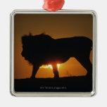 León africano (Panthera leo) contra puesta del sol Ornamento Para Reyes Magos