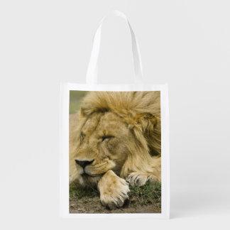 León africano, Panthera leo, fijación dormida Bolsa Reutilizable