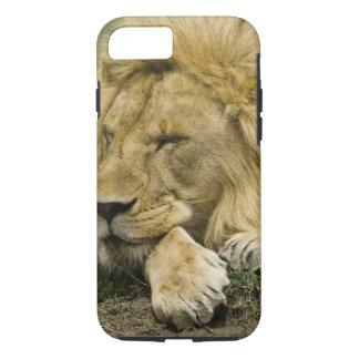 León africano, Panthera leo, fijación dormida Funda iPhone 7