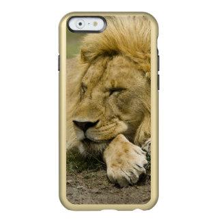 León africano, Panthera leo, fijación dormida Funda Para iPhone 6 Plus Incipio Feather Shine