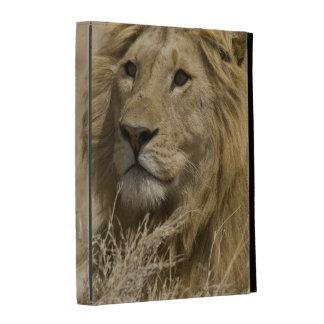 León africano, Panthera leo, retrato de a