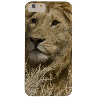 León africano, Panthera leo, retrato de a Funda Barely There iPhone 6 Plus